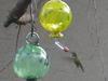 Girlbird