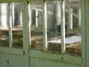 Greenhousea