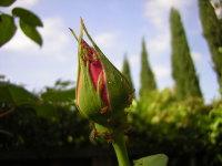 Ladybugs_001_1