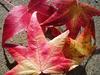 Leaf11