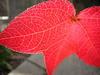 Leaf8