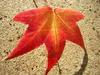 Leaf9