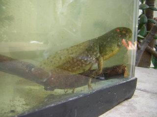Playdoughfrog_001