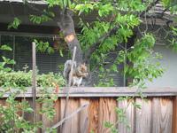 Squirrel2_1
